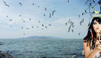Tailor Birds